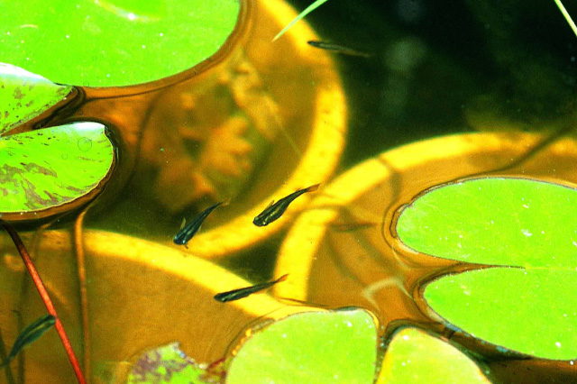 多様な生き物が持続して暮らせる生息空間「ビオトープ」イメージ